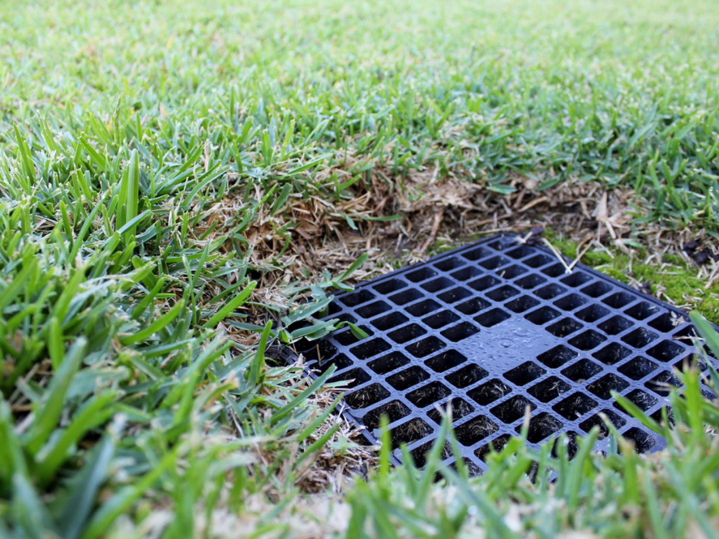Are You Drowning in Drainage Issues?